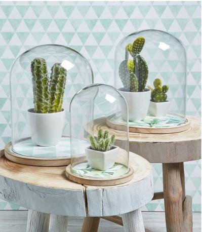 Afbeelding 1 Cactussen