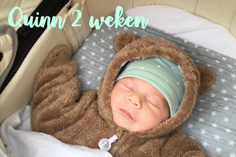 twee weken oud