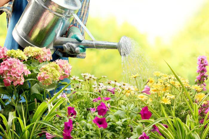 bloemen water geven